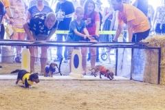 2018 Wiener Dog Races
